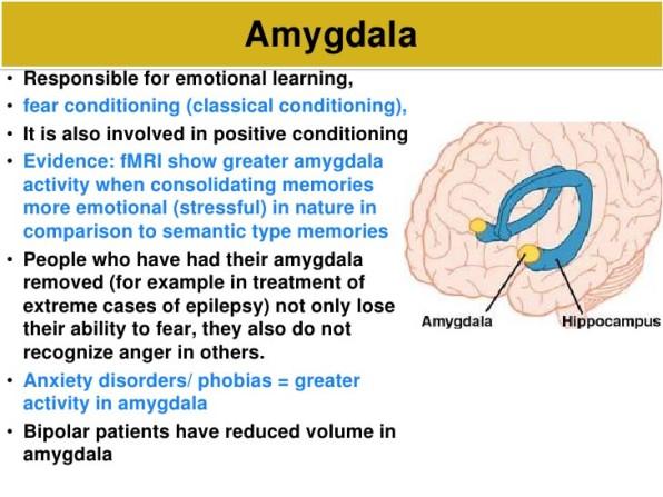 AmygdalaandBPD (1)