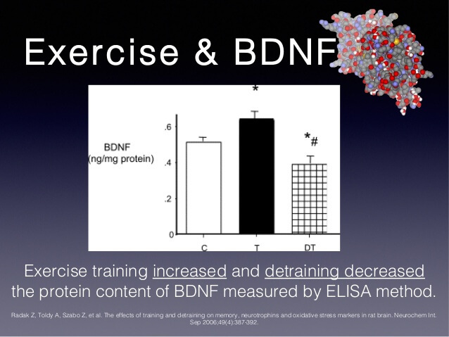 exercise-bdnf (1) (1)